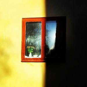 Roža na okenski polici
