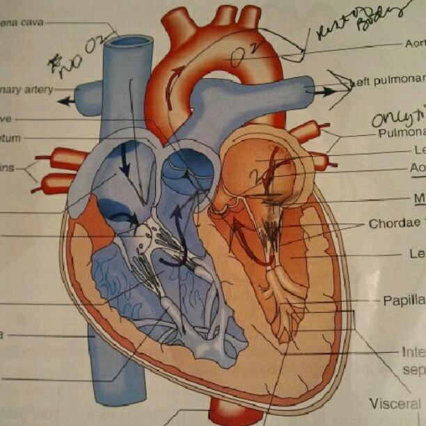Nizko in visoko intenzivne kardio vaje